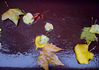 Autumnal Moments